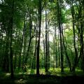 La foresta di Białowieża in Polonia
