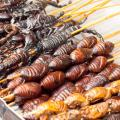 insetti, cibo, alimentazione, novel food, locuste, grilli,