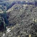 alberi-abbattuti