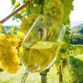 vino-biologico