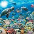 ambiente-marino