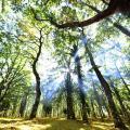 giornata-foreste
