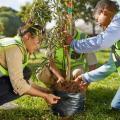 piantare-albero