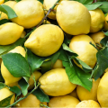 cassetta-limoni
