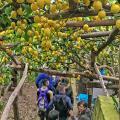 sentiero-limoni