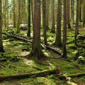 alberi-e.on