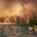incendio-artico