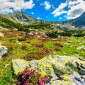 piante-alpine