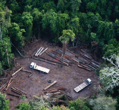 deforestazioneillegaleamazzonia.jpg