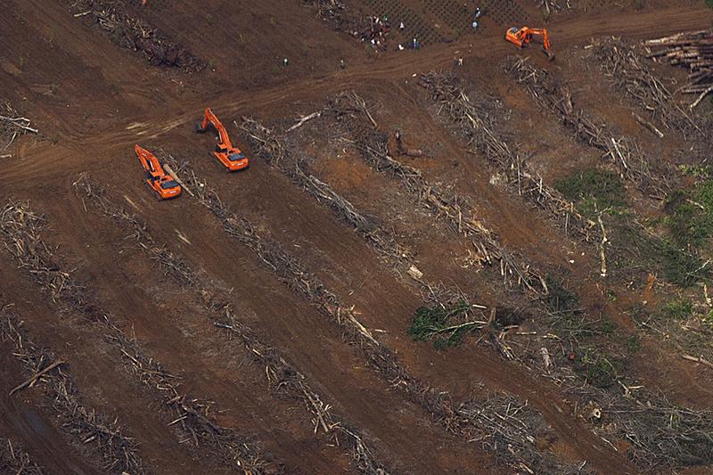 deforestazione.jpg