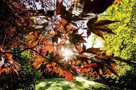 autunno2015mite.jpg