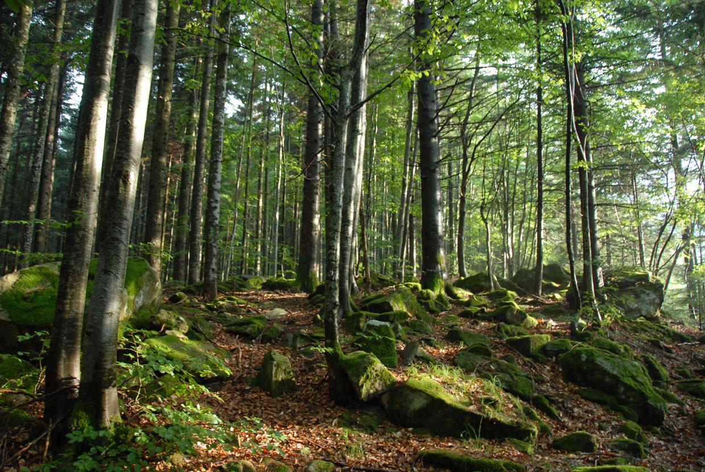 Cia  Aiel  Le Bioenergie Sono La Vera Alternativa