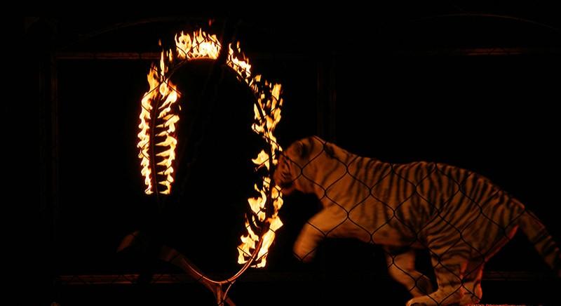 tigrealcirco.jpg