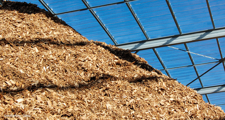 biomasse11.jpg