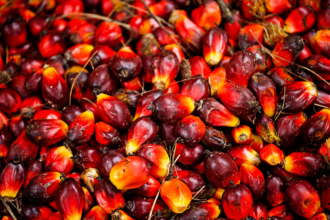 oil-palm-fruits.jpg