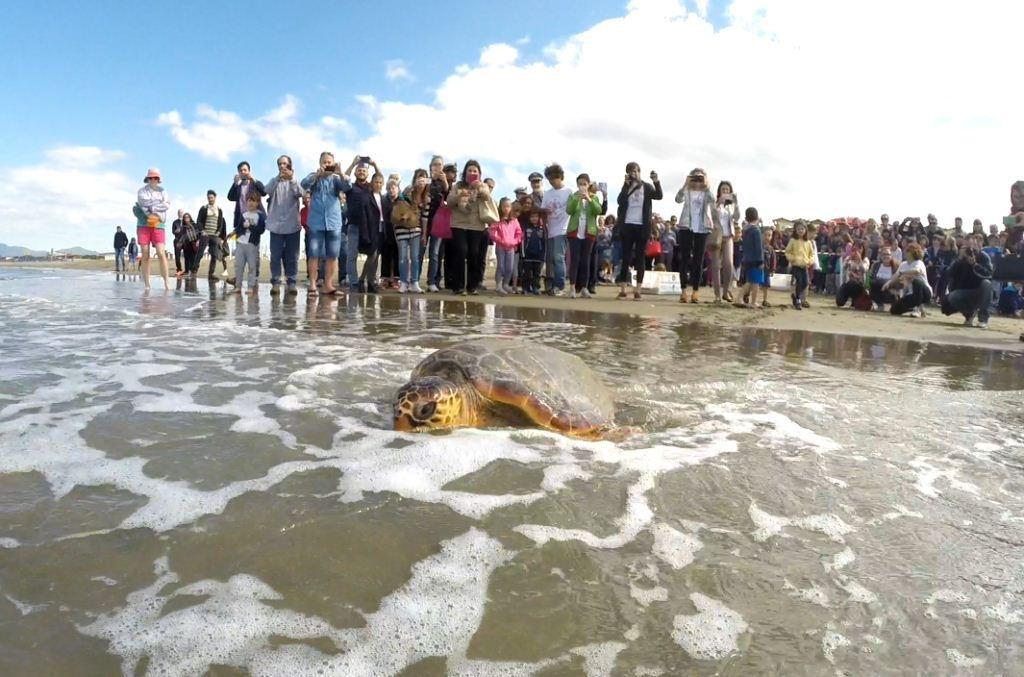 tartaruga-argentario.jpg