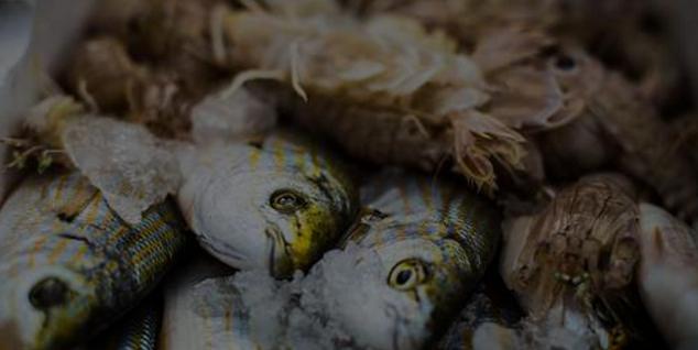 greenpeace-pesce-giusto.png