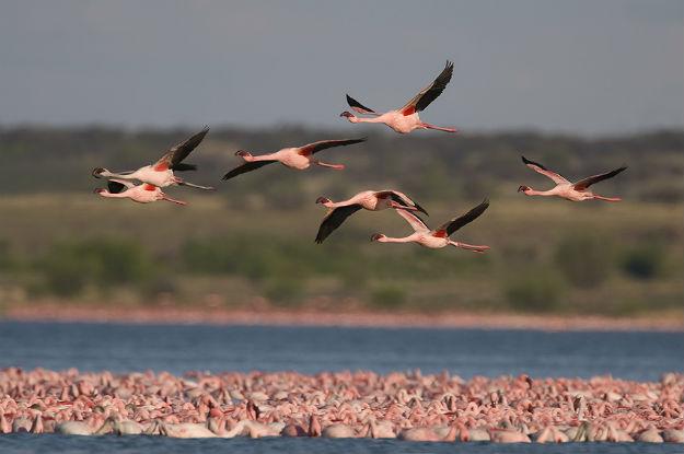 uccelli-migratori.jpg