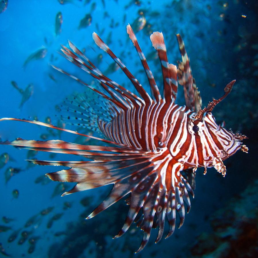 Mare allarme nelle acque italiane arrivato il pesce for Un pesce allevato in acque stagnanti