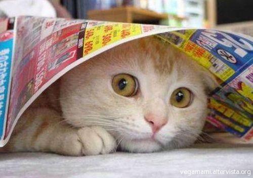 gatto-spaventato.jpg