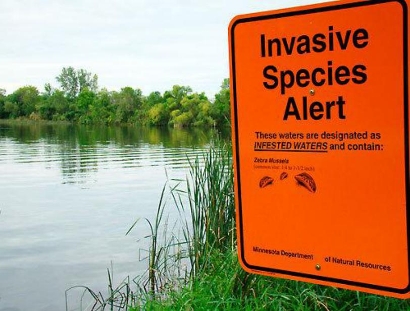 invasive-species-alert.jpg
