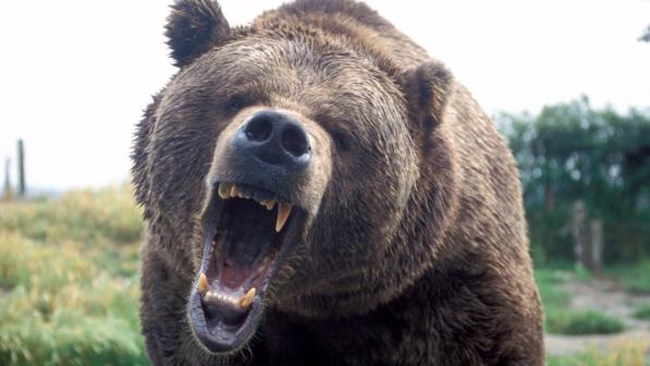 orso-feroce.jpg