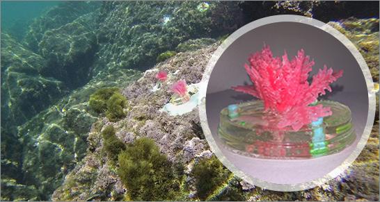 enea-alghe-artificiali.jpg