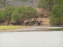 riserva-selous-tanzania-elefanti.jpg