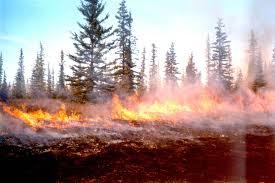 incendio-foresta.jpg