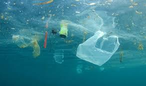 marine-littering-plastica.jpg