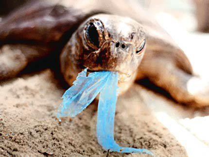 littering.jpg