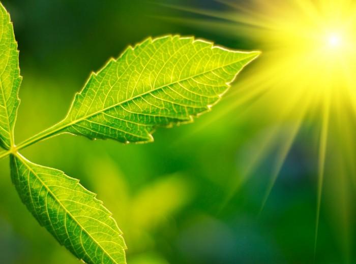 fotosintesi.jpg