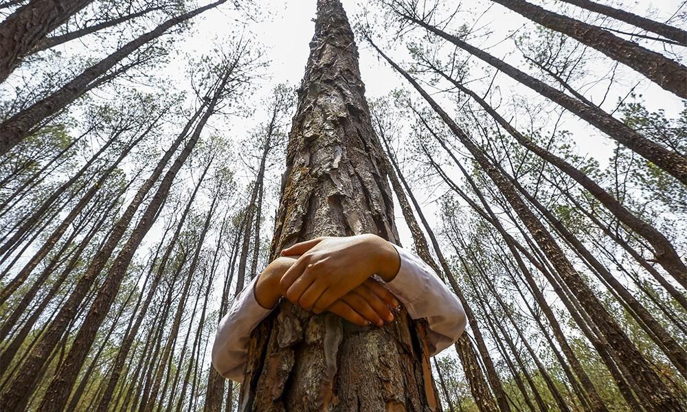alberi.jpg