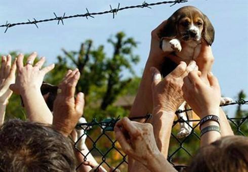 beagle-green-hill.jpg