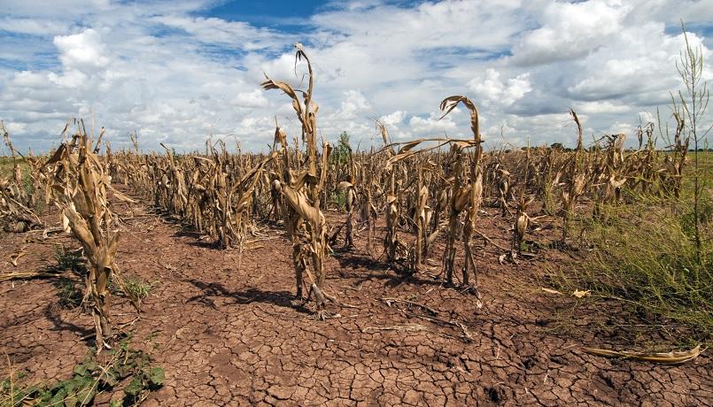 agricoltura-cambiamento-climatico.jpg