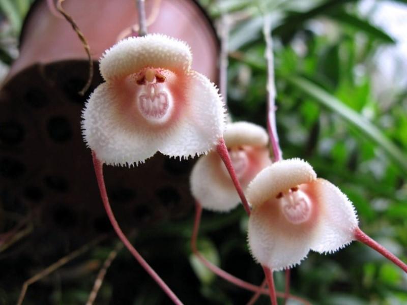 orchidee-rare.jpg