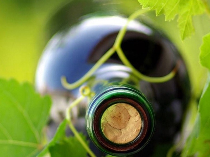 vino-biologico.jpg