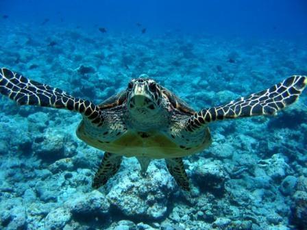 tartaruga-marina.jpg