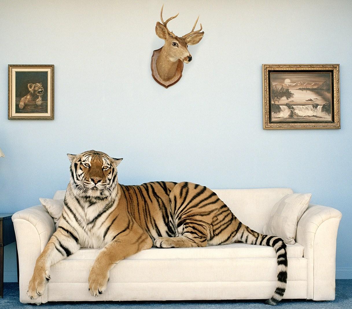 tigre-salotto.jpg