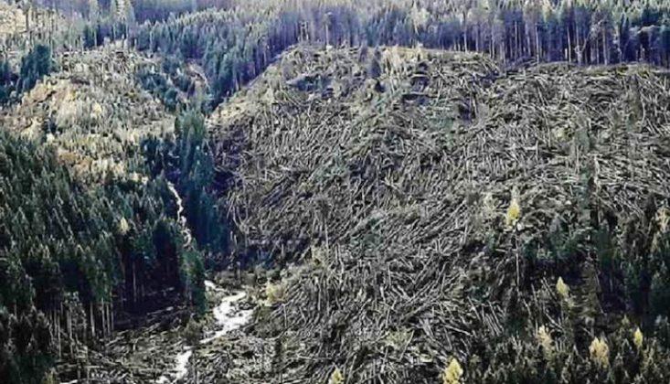 trentino-alberi-abbattuti.jpg