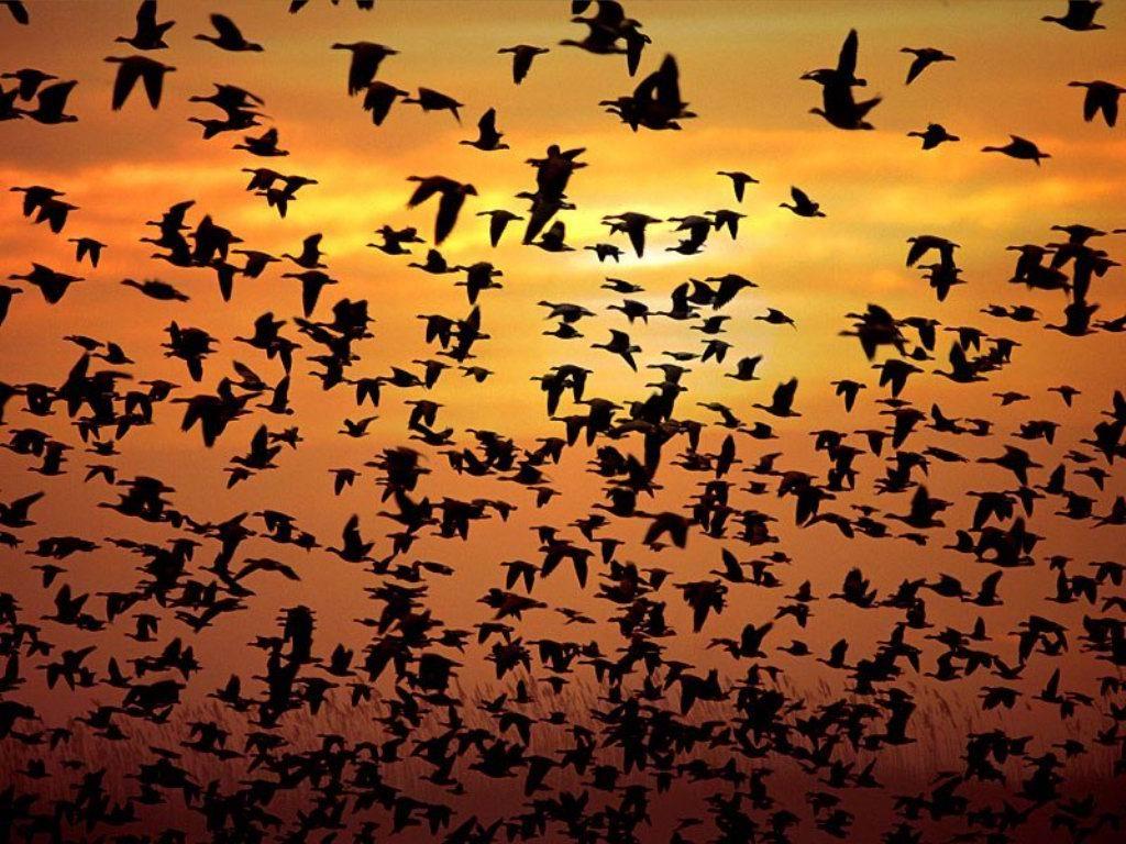 uccelli.jpg