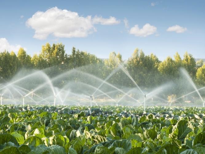 irrigazione-campi.jpeg
