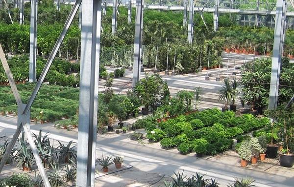 assofloro-vivaio-piante.jpg