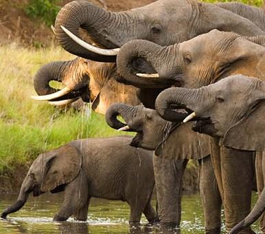 elefantiafricani.jpg