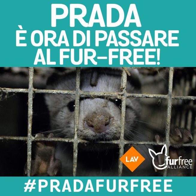 prada-fur-free.jpg