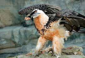 avvoltoio.jpg