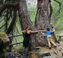 abbraccio-alberi.jpg