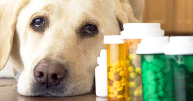 farmacia-veterinaria.jpg