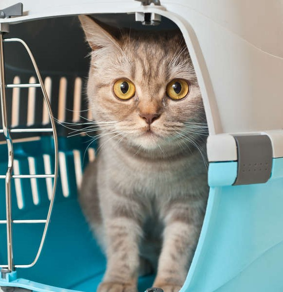 viaggiare-gatti.jpg