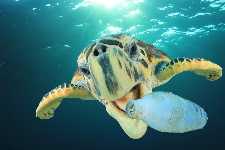 tartarugamangia-plastica.jpg